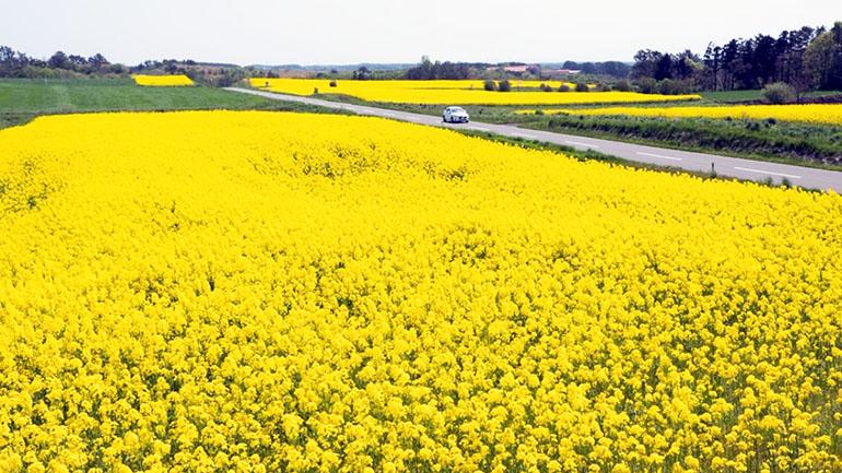 【青森県】道の駅よこはま「菜の花プラザ」は下北半島に行くなら必ず立ち寄りたい休憩所