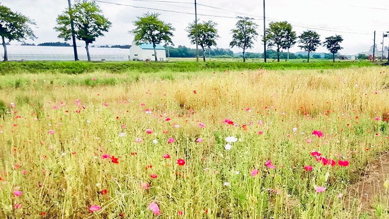 【滋賀】自然と田園風景に囲まれた「道の駅 東近江市あいとうマーガレットステーション」で人気ジェラートを食べよう!