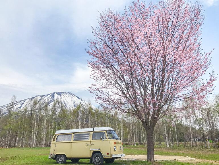 真狩焚き火キャンプ場 桜 ワーゲンバス