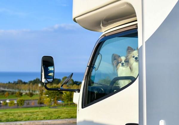 ペット連れの車旅にはマストアイテム!?クラウド型室温データロガー「おんどとり」をレビュー
