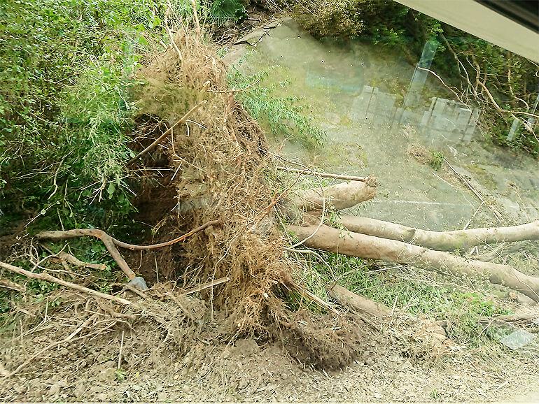 台風 倒木
