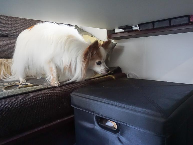 キャンピングカー 車内 犬
