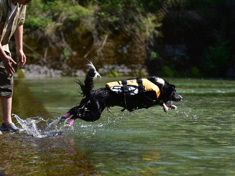 犬 水遊び