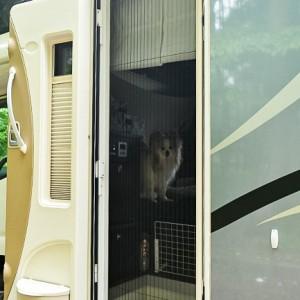 ナッツRVの「クレア・エボリューション」は愛犬との快適な車旅にオススメ!ペットが車でもリラックスできる工夫も紹介