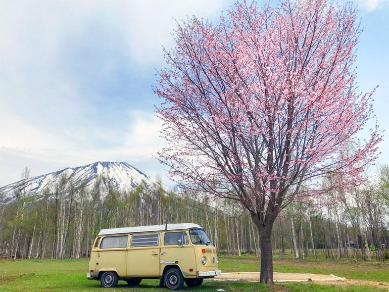 桜とキャンピングカー