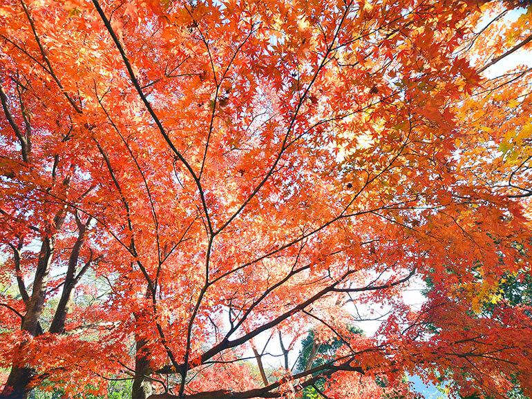 楽山公園 紅葉