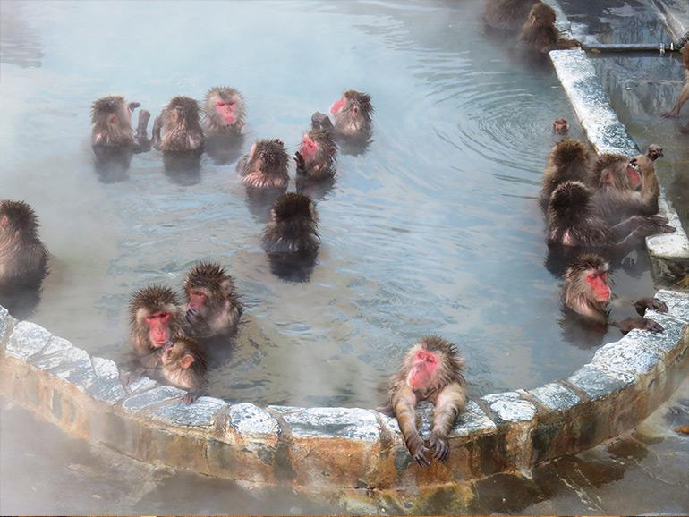サル山 猿の入浴