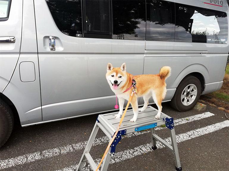 脚立に立つ犬