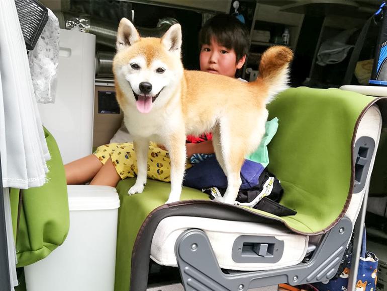 キャンピングカーに乗る犬