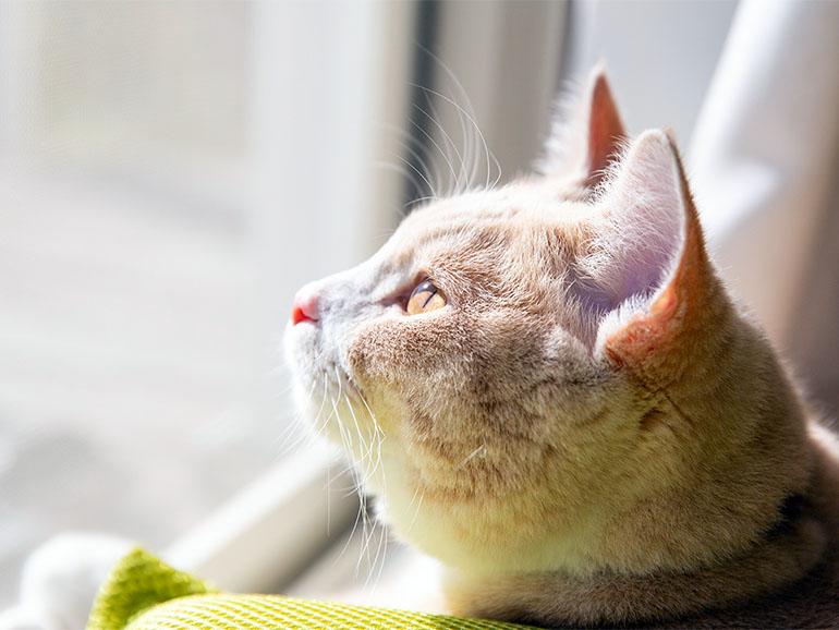 車内から外を見る猫