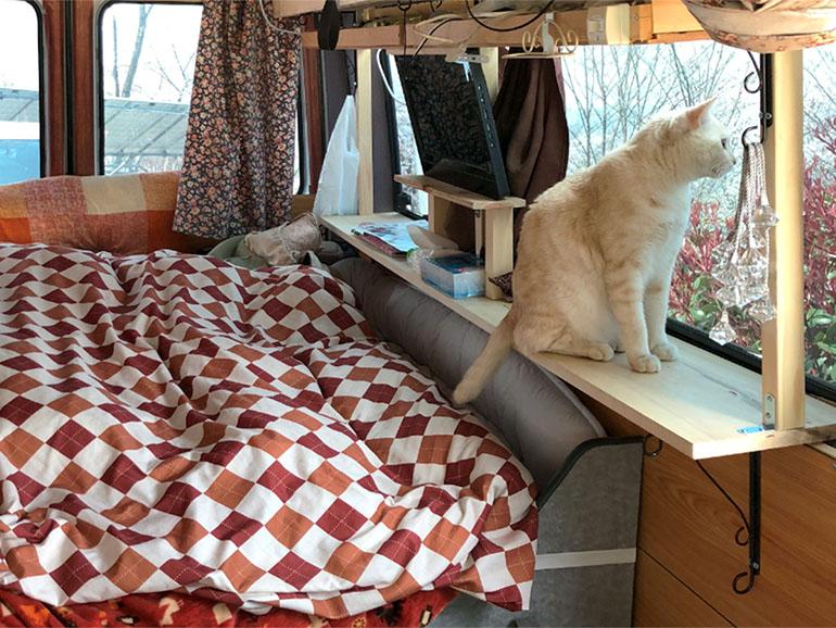 キャンピングカーにいる猫