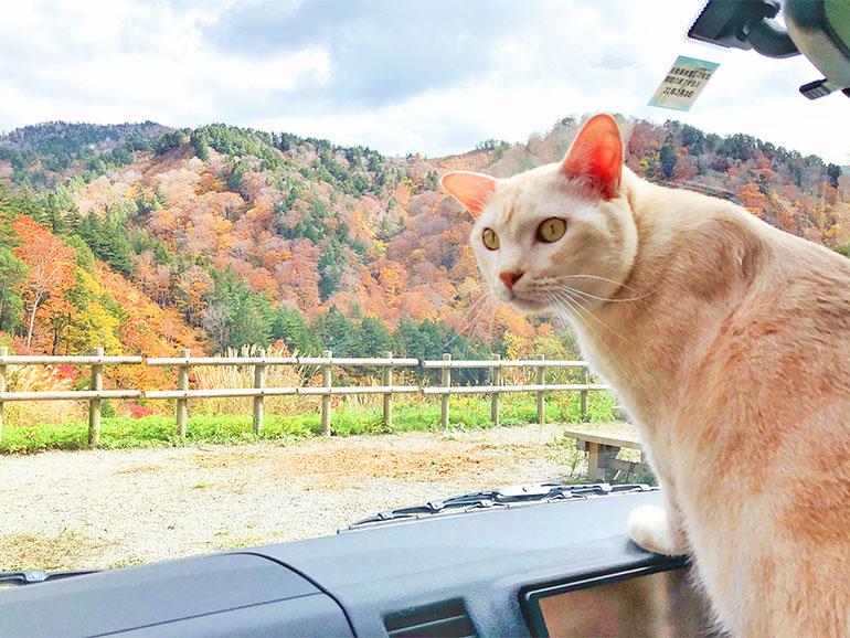 車内から外を眺める猫