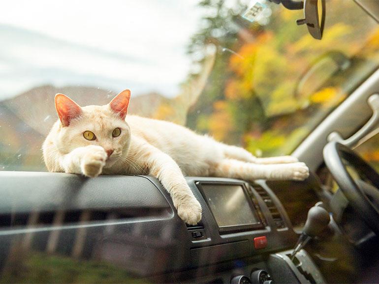 運転席で寛ぐ猫