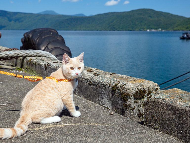 海の前の猫