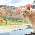 【猫とキャンピングカー旅行】注意点と準備しておくもの