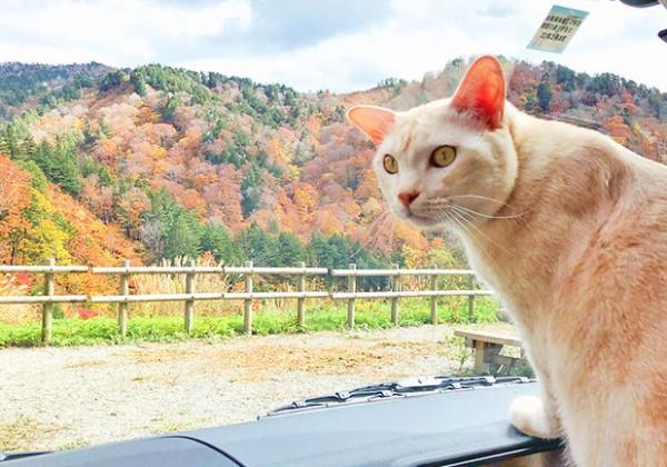 キャンピングカーから外を眺める猫