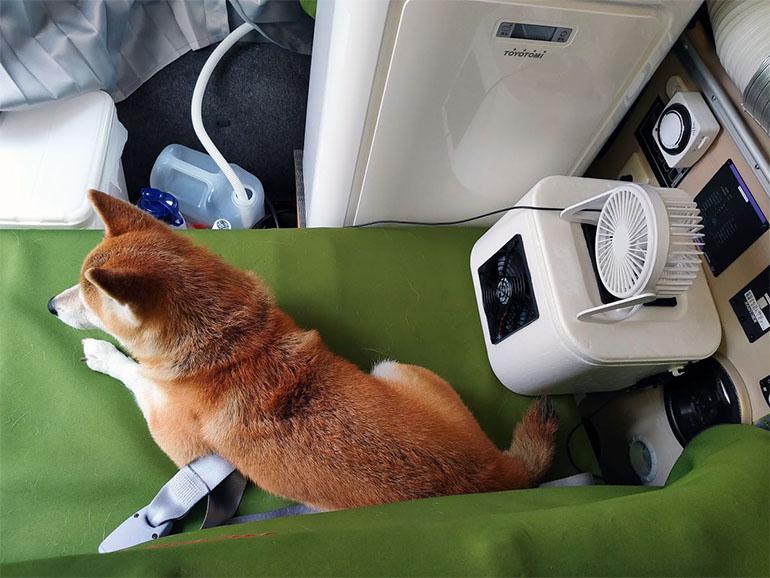 自作の冷風機で涼む愛犬