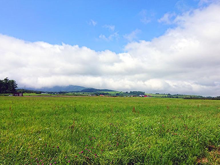 佐々木ファームの畑