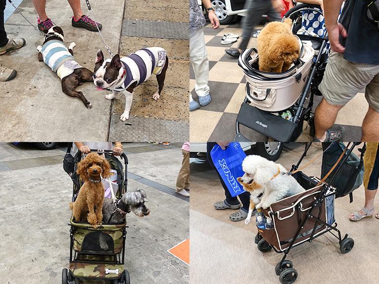 東京キャンピングカーショーに来ていた犬連れのお客さんたち