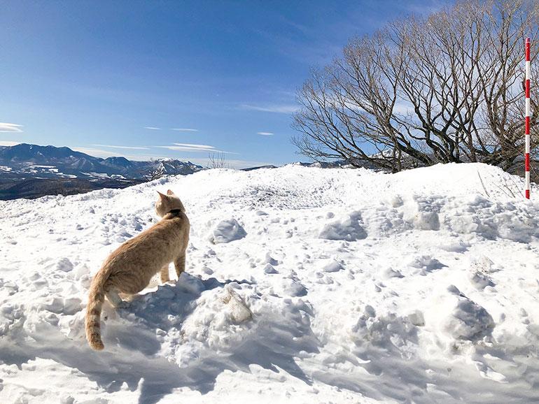 雪景色と猫