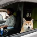 愛犬と一緒に車中泊!一人+一匹で車旅に出るときの注意点やその様子を紹介