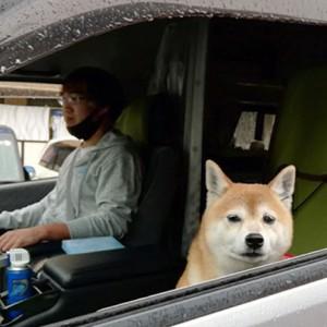 犬と車中泊