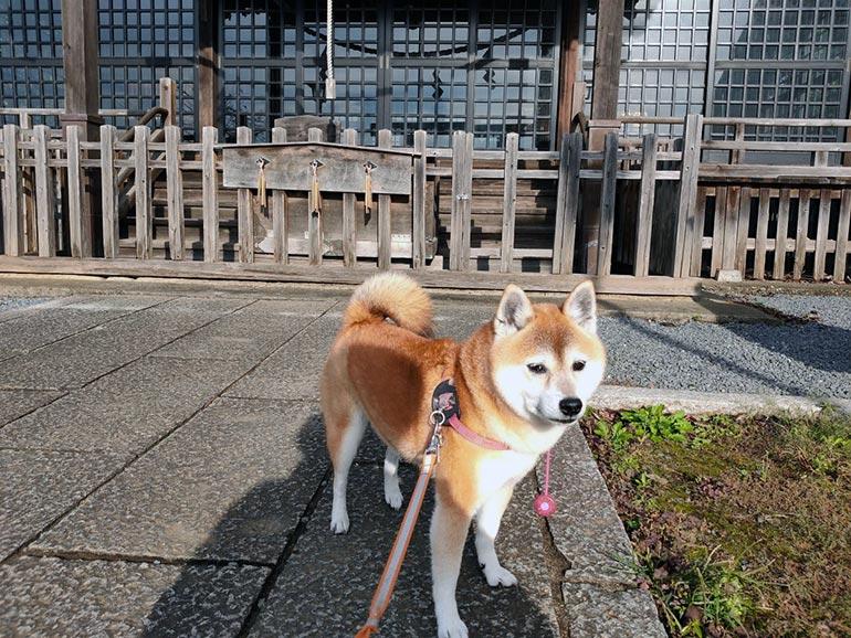神社の前の犬