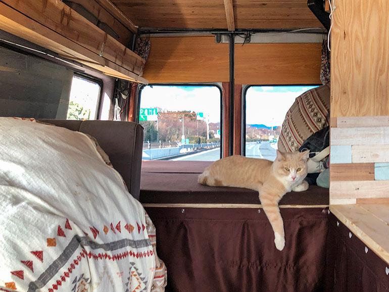 車内で寛ぐ猫