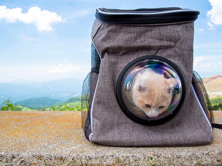 バッグの中の猫