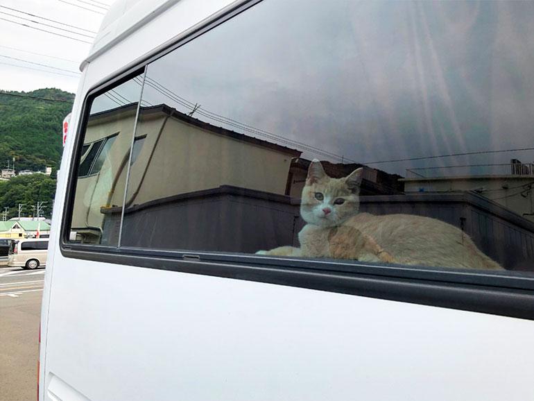 キャンピングカーから覗く猫
