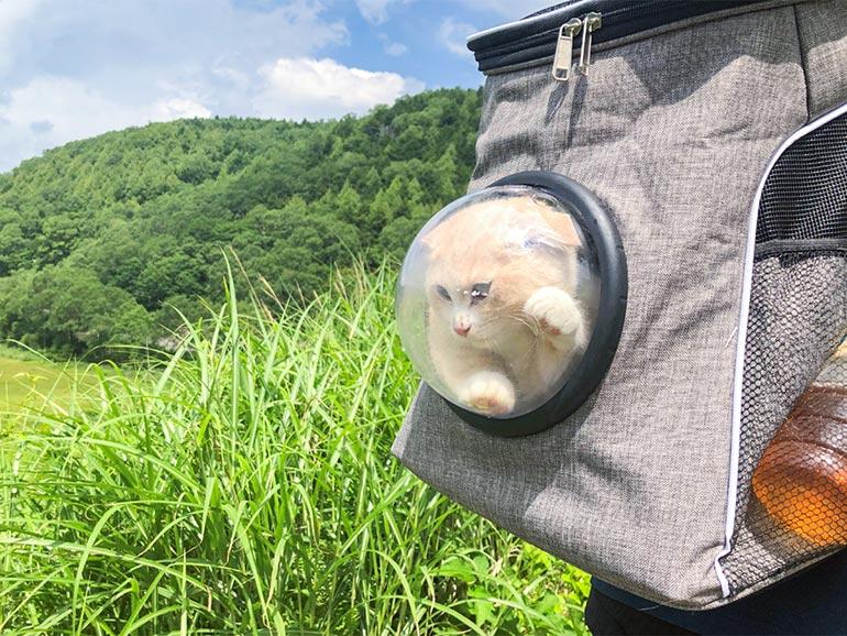 志賀高原の湿原 猫