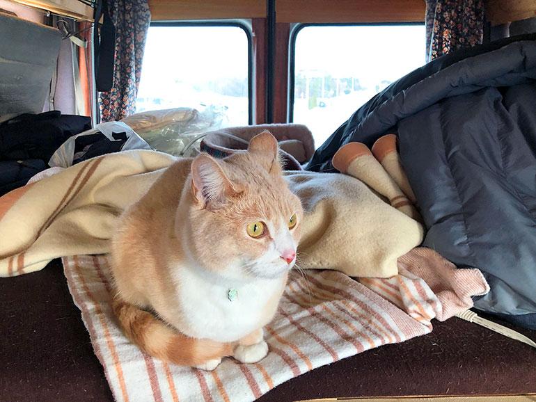 キャンピングカーと猫