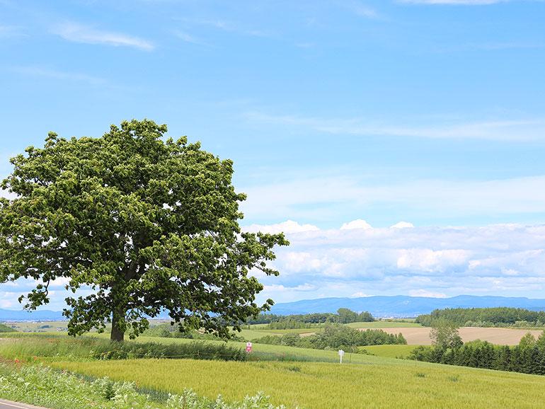 北海道の広くなだらかな丘