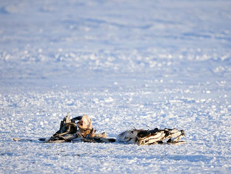 氷下待網漁の漁師が置いて行った稚魚