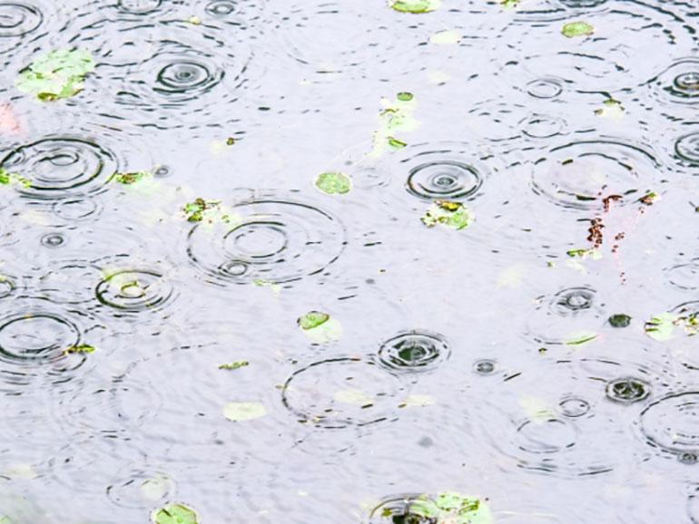 水溜りに雨が降りつける様子