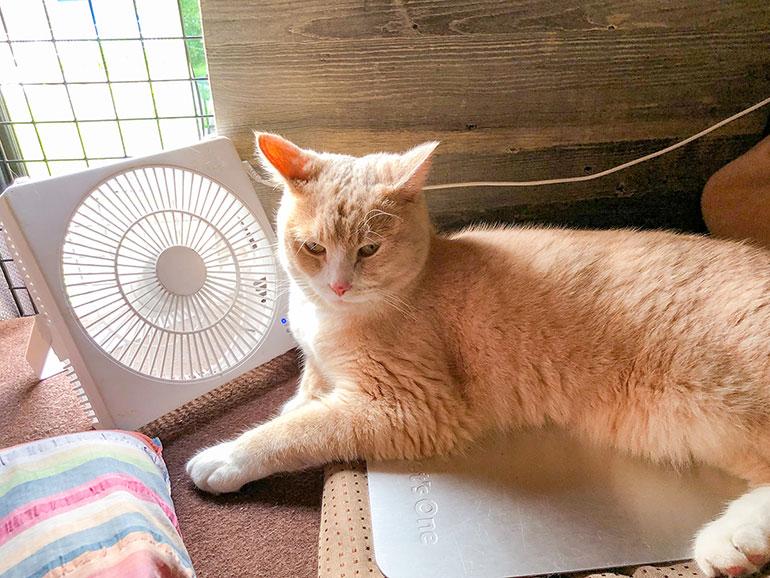 湿気対策扇風機